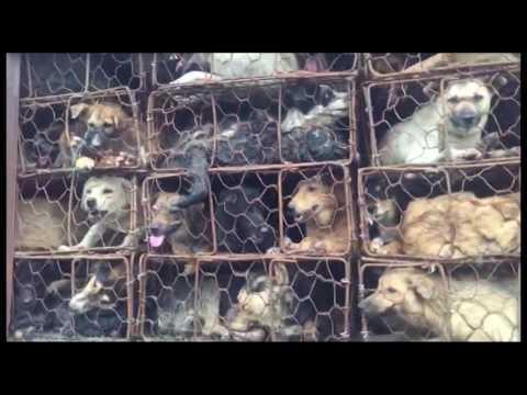 Culture / Chine: La viande de chien au menu ce soir