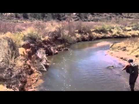 how to catch tiger trout