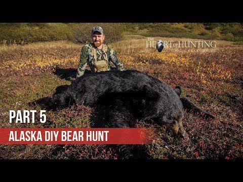 ALASKA BLACK BEAR SUCCESS!  - Alaska DIY Bear Hunt (Part 5 Of 5)