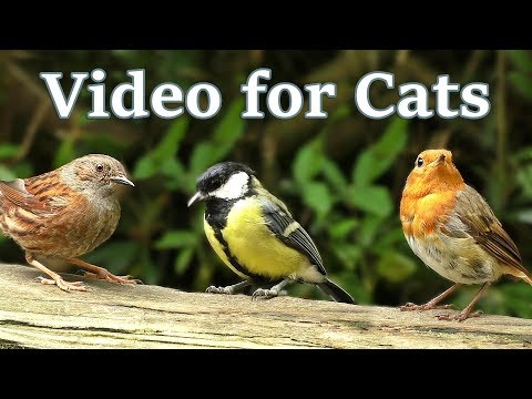Videos for Cats to Watch : Birds and Squirrels in July -  One Hour