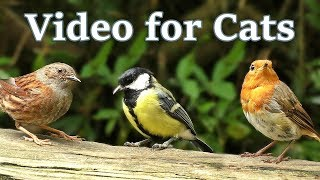 Videos for Cats to Watch : Birds and Squirrels in July -  One Hour thumbnail