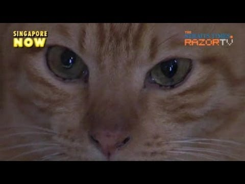 """""""Declawing is barbaric!"""" (Declawing cats Pt 2)"""