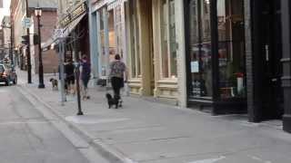 Beginner Dog Obedience Class Doing Class Next To Busy Street