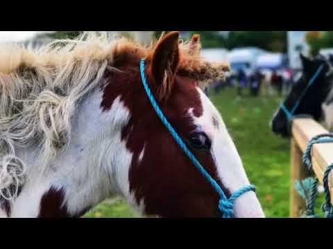 Ballinasloe Horse Fair, 2017--Galway
