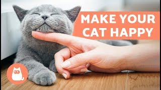 How to Make Your Cat Happy – 10 Tips for a Content Cat