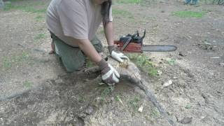 How to Burn  a tree Stump by NDN JOE, or the Stump Burn using the log torch,