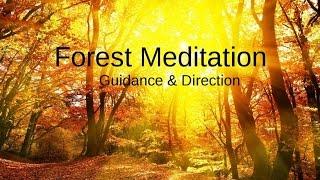 Forest Meditation for Encouragement & Guidance, Spoken Word Visualization
