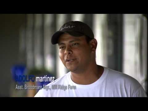 Kentucky Equine Management Internship Promotional Video