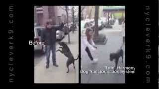 Aggressive Dog Nyc Streets Training!christina Shusterich Ny Clever K9