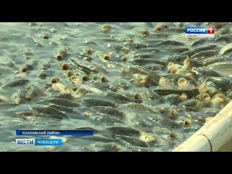 В Козловском районе в селе Карамышево возрождают знаменитый рыбхоз