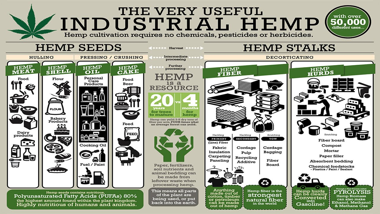 "the uses and benefits of industrial hemp And hemp's use as a cloth for swaddling infants and covering the  ""and by  exploring innovative ways to use industrial hemp to benefit a."