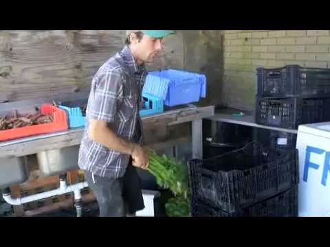 A Field Goods Morning: Picking Up Produce