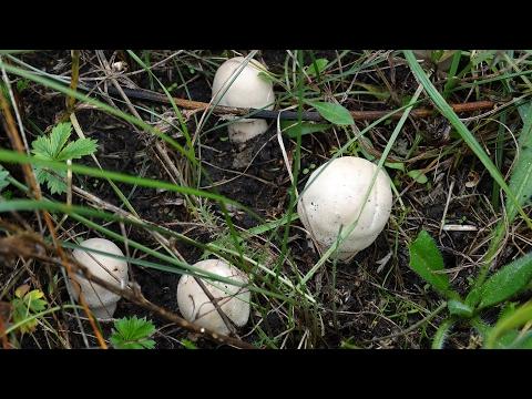 соленые грибы, рецепт приготовления