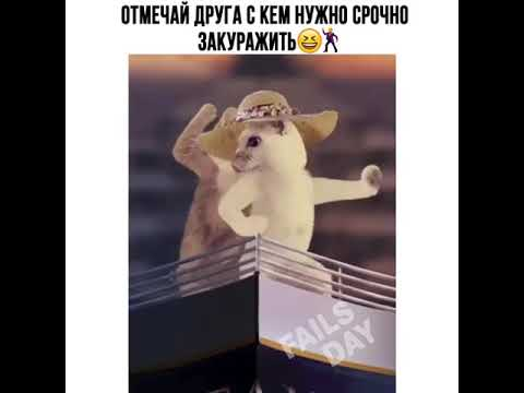 Видео Приколы Юмор Фэйлы Смех Ржака Fail Funny Vines 112