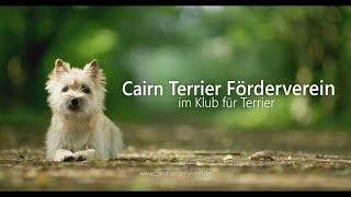Warum wir Cairn Terrier lieben...
