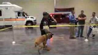 Police Dog Training - Sit Means Sit At Florida Police Ex
