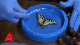 Insect Encapsulation using Alumilite Clear Resin by Alumilite