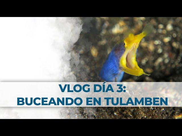 2 Little Divers Bali Vlog Día 3: Buceando en Tulamben