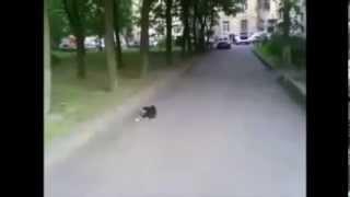 ЧМ по котболлу или коты гоняют шарик