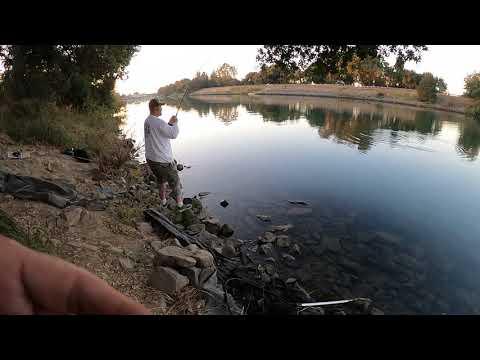 Salmon Report In The Sacramento River