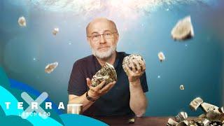 Woher stammt das Gold auf der Erde? | Harald Lesch