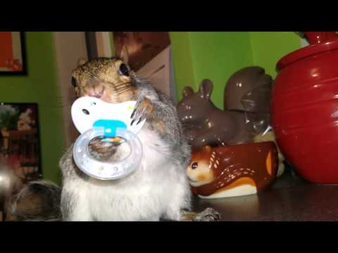 Wally's the Squirrel: Loving his Pacifier!!