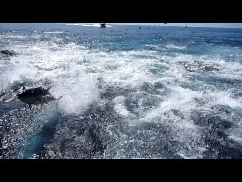 Panama Fishing Tuna Frenzy Madness!