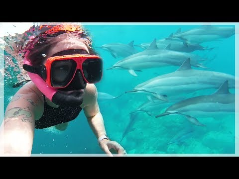 SWIMMING WITH WILD DOLPHINS IN HAWAII!