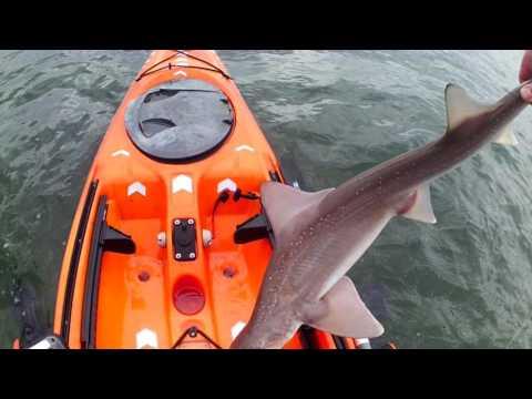 Mumbles Smoothhound Kayak Fishing