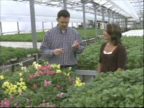 About Us - Mariposa Farms - Growers of Culinary Herbs, Grinnell, Iowa