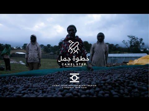 رحلة القهوة إلى أثيوبيا، وثائقيات خطوة جمل Ethiopian Coffee Farms Trip, Camel Step Documentary