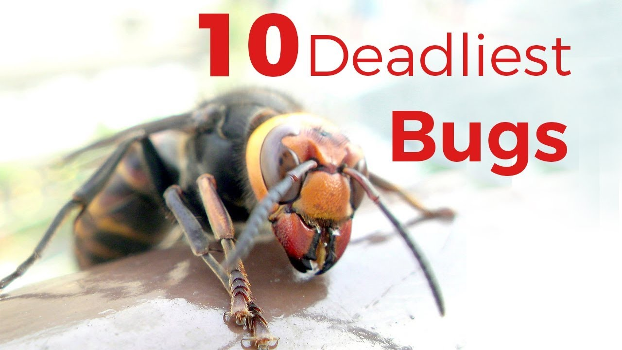 Deadly insects you didn't Knew about