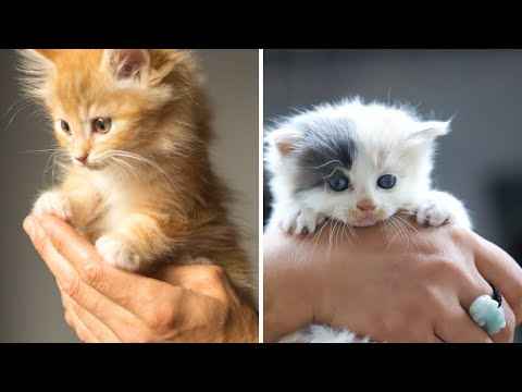 funny cute cats Videos Compilation- cutest funniest cats -omg funny! #14