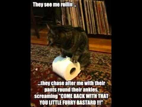 Funny cat sayings - YouTube