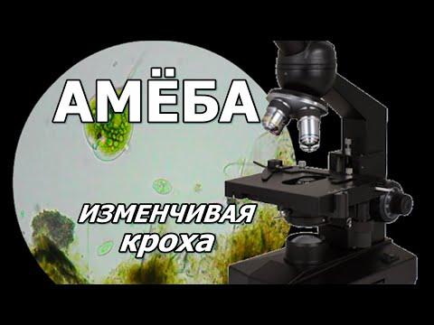 Вопрос: Какого пола амеба?