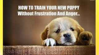 How To Train A Puppy - Video Based Puppy Training On How To Train Your Puppy