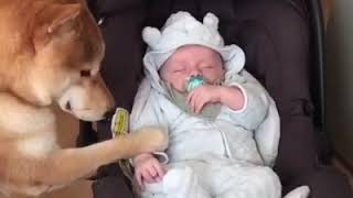 Baby and Dog Fun and Fails moments  Funny Baby Video