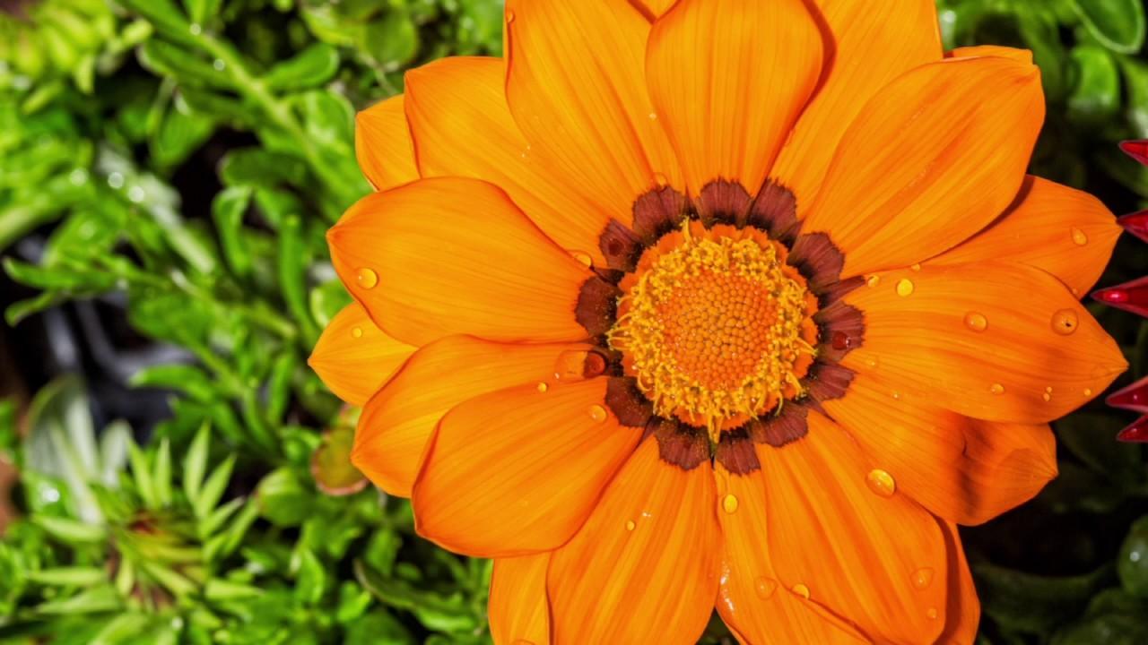Cerjardin garden el vivero de plantas y flores mas bonito for Viveros de plantas