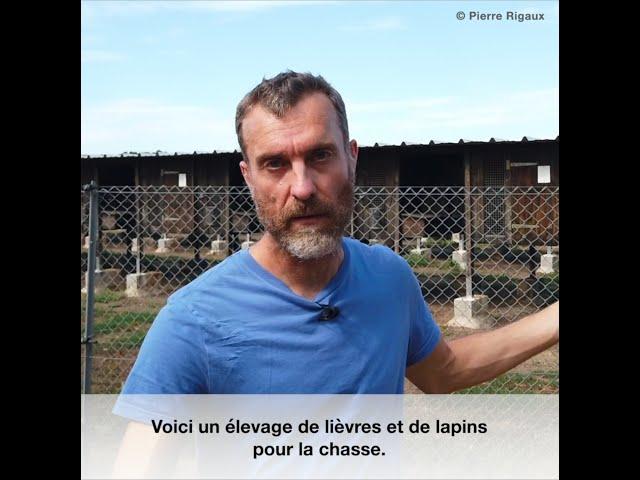 Élevage de lièvres et lapins pour la chasse