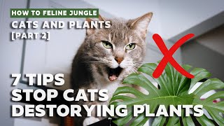 How to Keep Cąts from Destroying Your House plants l 7 Tips & Strategies 2020