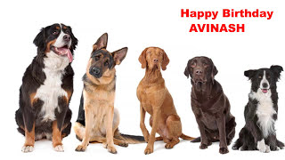 Avinash - Dogs Perros - Happy Birthday