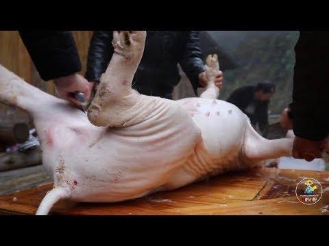 叔叔家杀了两头猪,小野大清早就去帮忙,差点让猪跑了【农村小野】