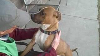 *adopted* Sadie 7209145 Humane Society Colorado Adopt