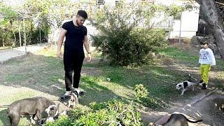 Gambar cover Köpeklerimizle Bahçede Oyunlar Oynadık.Bilge Kağan Sonunda Hera'nın Yavrularını Sevebildi