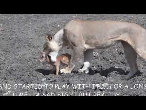 SELOUS GAME RESERVE , TANZANIA