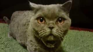 Кошки и экшн-камера - первое знакомство