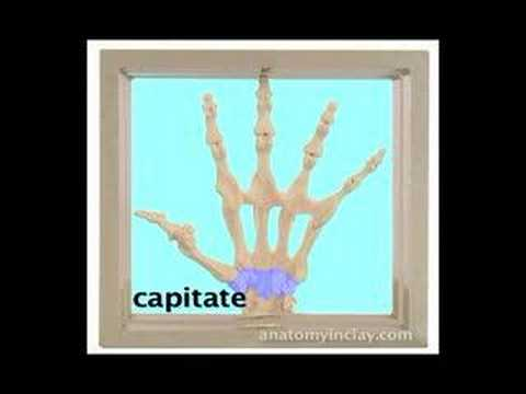 Skeletal Hand Anatomy Anatomy In Clay Learning System Youtube