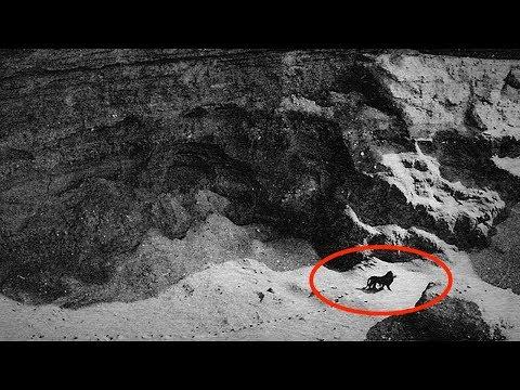 7 letzte Fotos und Videos von bereits ausgestorbenen Tieren!