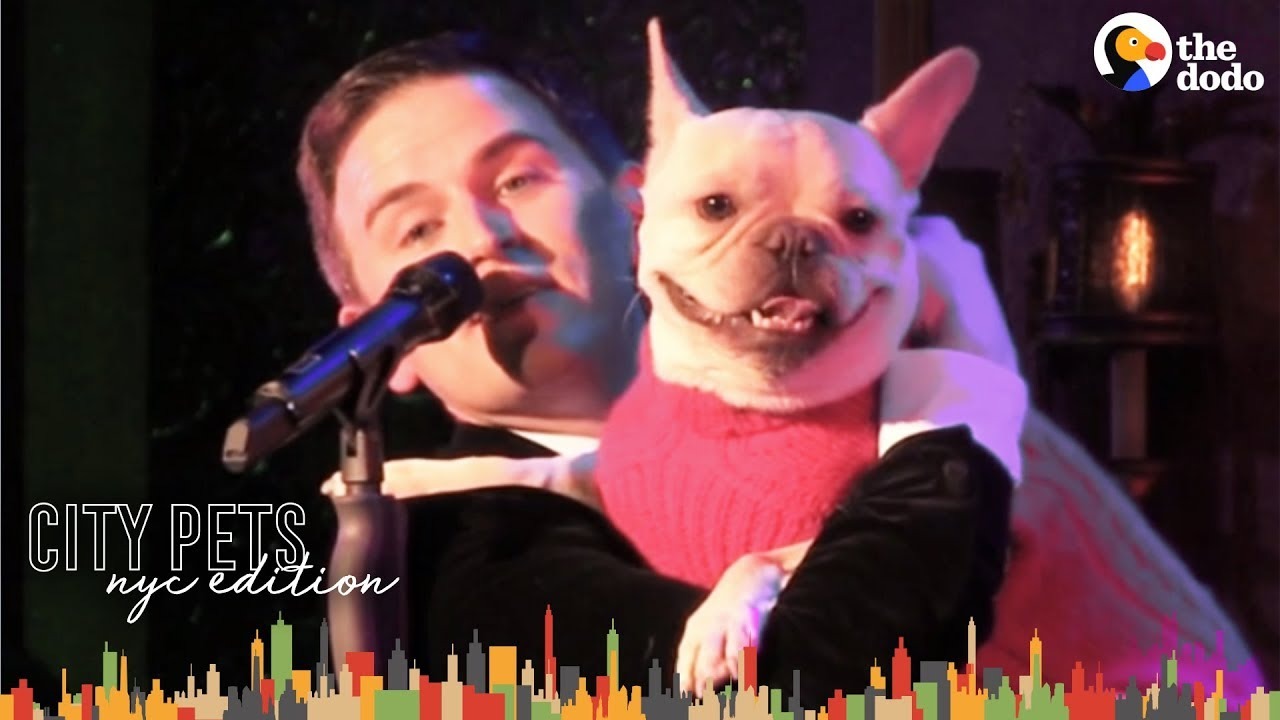 French Bulldog and Dad are NYC Broadway Stars | The Dodo City Pets