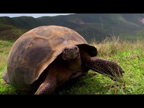 Charles Darwin's Galapagos Discovery | #Attenborough90 | BBC